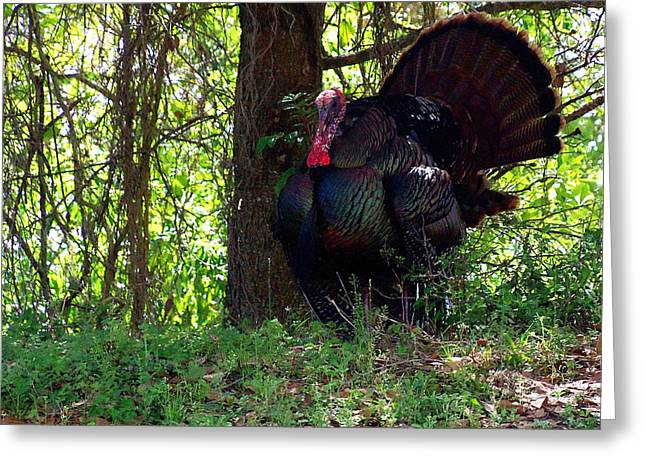 Turkey 003 Greeting Card by Chris Mercer