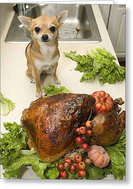 Turkey And Dog Greeting Card