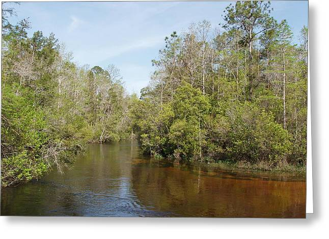 Greeting Card featuring the photograph Turkey Creek Nature Trail In Niceville Florida by Teresa Schomig