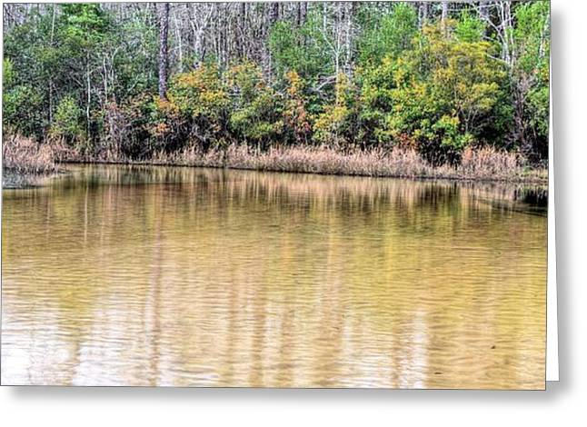 Turkey Hen Creek Pano Greeting Card by JC Findley