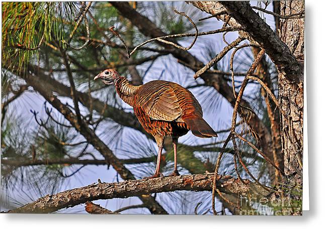Turkey In A Tree Greeting Card by Al Powell Photography USA