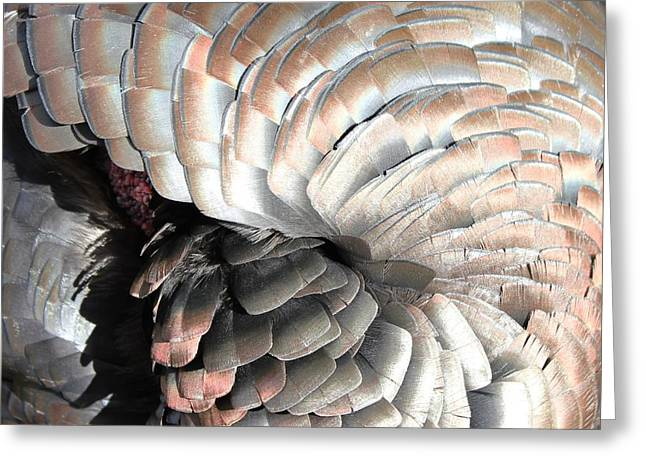 Greeting Card featuring the photograph Turkey Siesta by Diane Alexander