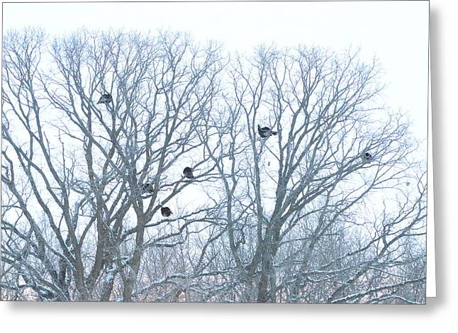 Greeting Card featuring the photograph Turkey Tree by Dacia Doroff