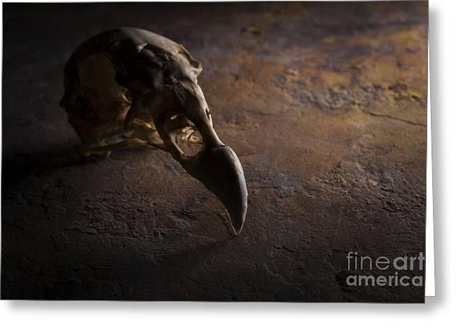 Turkey Vulture Skull On Slate Greeting Card