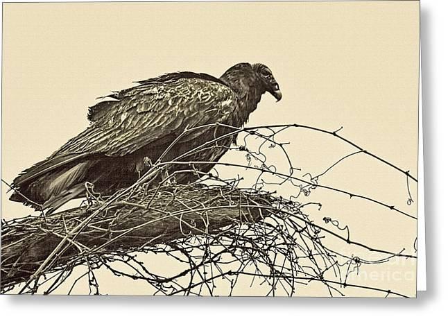 Turkey Vulture V2 Greeting Card