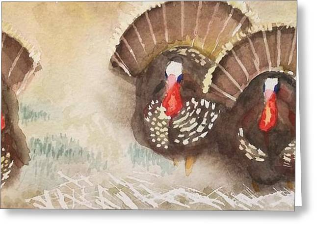 Turkeys Greeting Card