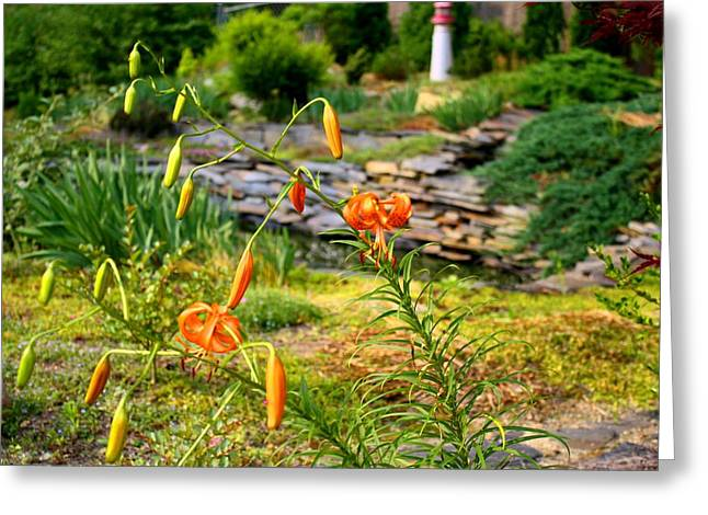 Greeting Card featuring the photograph Turk's Cap Lily by Kathryn Meyer