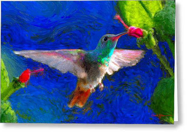 Da052 Turkscap Hummingbird  Greeting Card