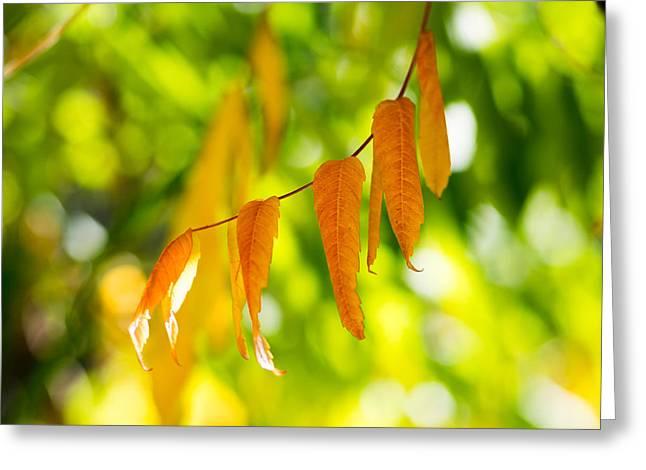 Greeting Card featuring the photograph Turning Autumn by Aaron Aldrich