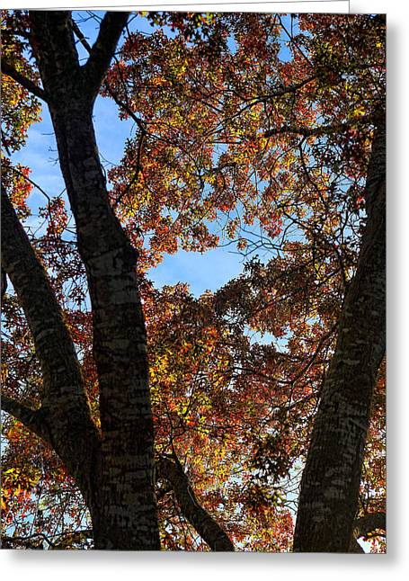 Turning Leaves In Oak Tree In Dec. Greeting Card by Linda Phelps
