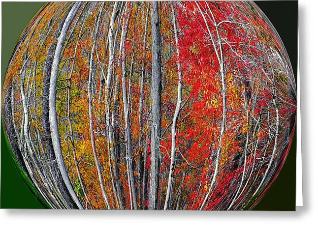 Turning Leaves Greeting Card by Scott Cameron