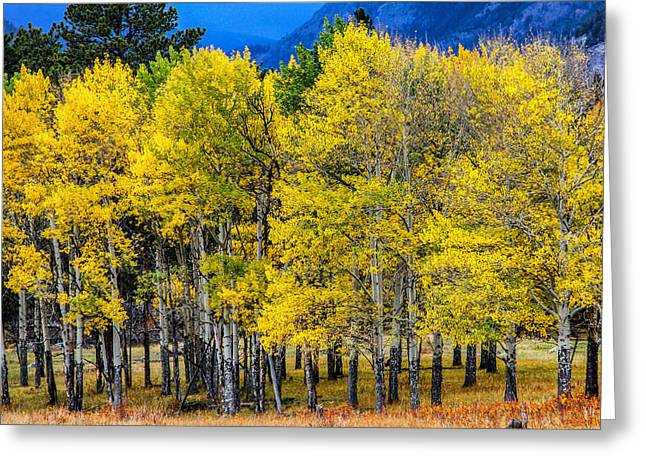 Turning Of The Aspens Greeting Card by Juli Ellen