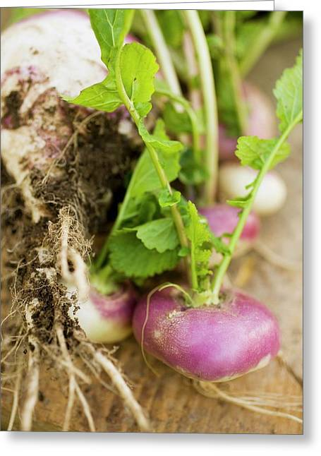 Turnips With Roots, Leaves And Soil Greeting Card