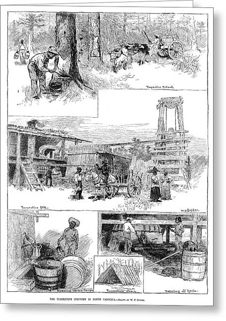Turpentine Industry, 1884 Greeting Card