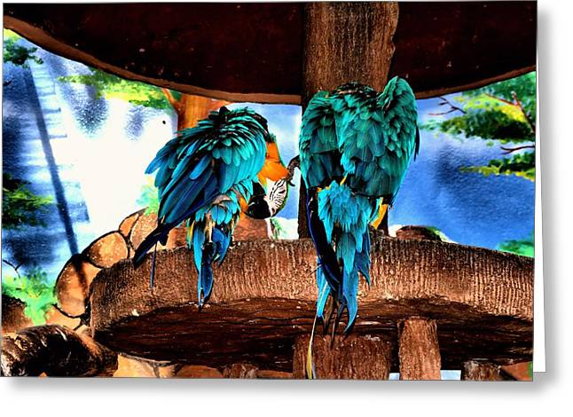 Turquoise Parrots Greeting Card by Siti  Syuhada