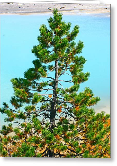 Turquoise Tree Greeting Card by Jon Emery