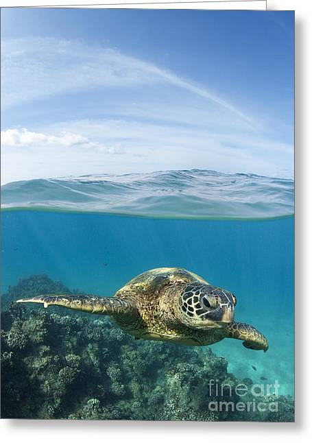 Turtle At Black Rock Greeting Card