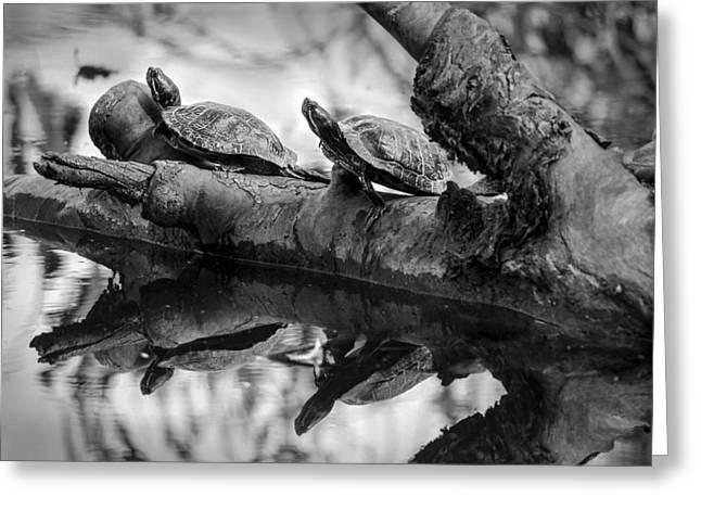 Turtle Bffs Bw By Denise Dube Greeting Card