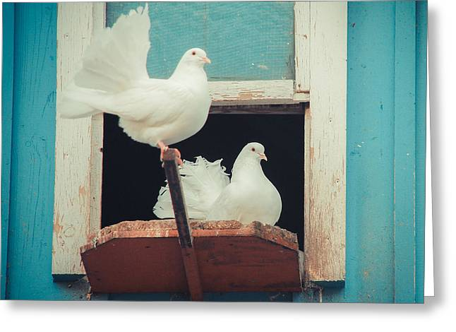 Turtle Doves 1x1 Greeting Card by Hannes Cmarits