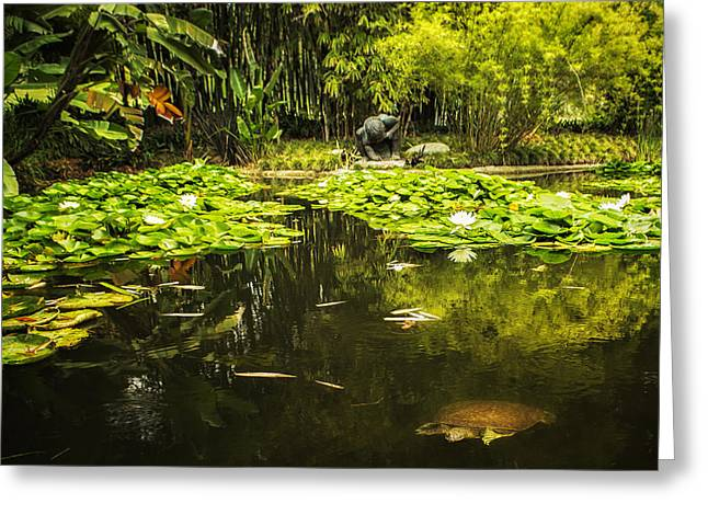 Greeting Card featuring the photograph Turtle In A Lily Pond by Belinda Greb