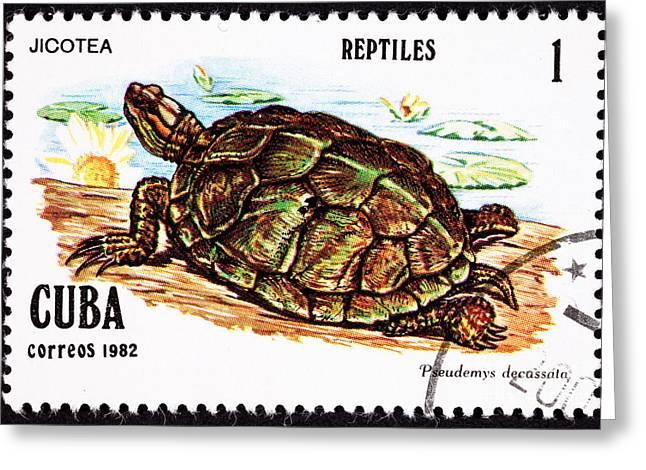 Turtle Jicotea North Antillean Slider Trachemy Greeting Card by Jim Pruitt