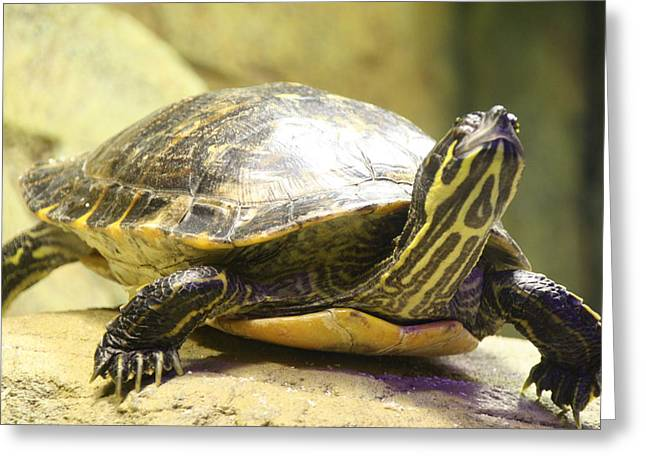 Turtle Greeting Card by Liz Bills