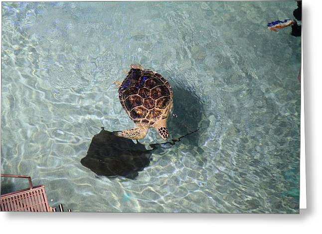 Turtle - National Aquarium In Baltimore Md - 121213 Greeting Card by DC Photographer