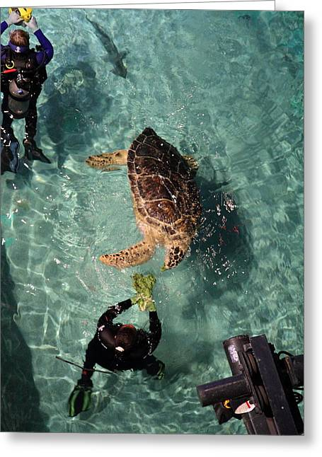 Turtle - National Aquarium In Baltimore Md - 121217 Greeting Card by DC Photographer