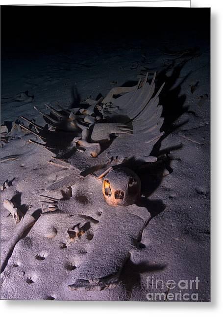 Turtle Skeleton Cave Greeting Card by Soren Egeberg