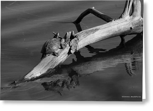 Greeting Card featuring the photograph Turtle Sun Bw by Tannis  Baldwin