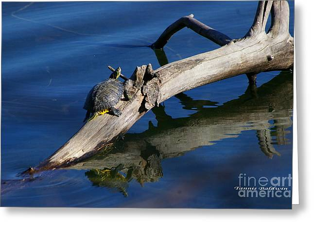 Greeting Card featuring the photograph Turtle Sun by Tannis  Baldwin