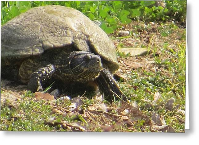 Greeting Card featuring the photograph Turtle Up Close by Ella Kaye Dickey