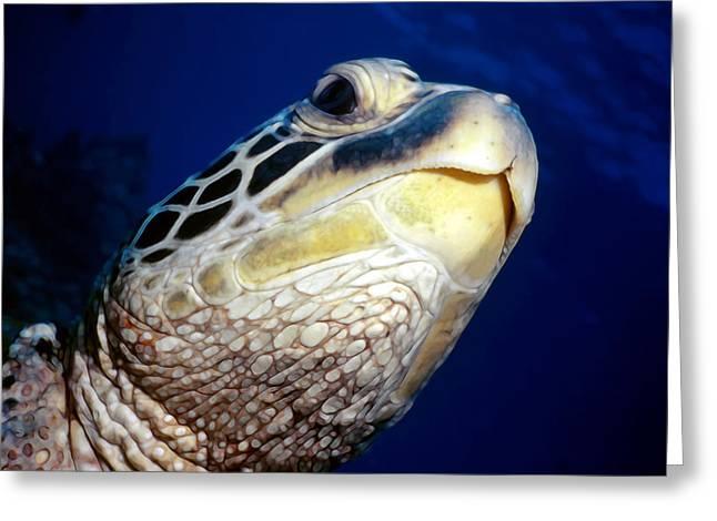 Turtles 1 Greeting Card by Dawn Eshelman