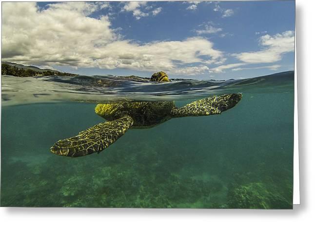 Turtles Need Air Too Greeting Card by Brad Scott