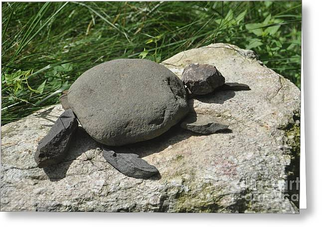 Turtle's Rock Greeting Card