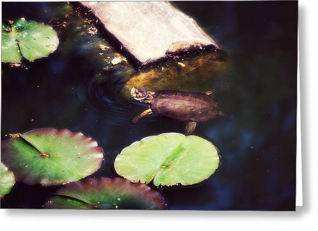 Turtling Around Greeting Card by Melanie Lankford Photography
