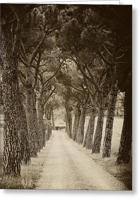 Greeting Card featuring the photograph Tuscan Pines by Hugh Smith