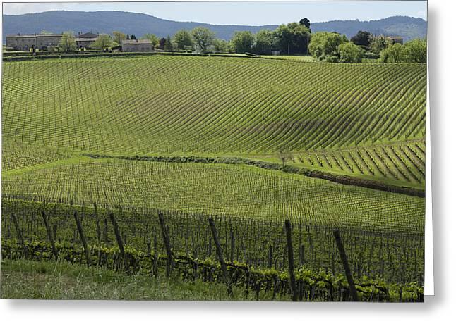 Tuscany Vineyard Series 2 Greeting Card