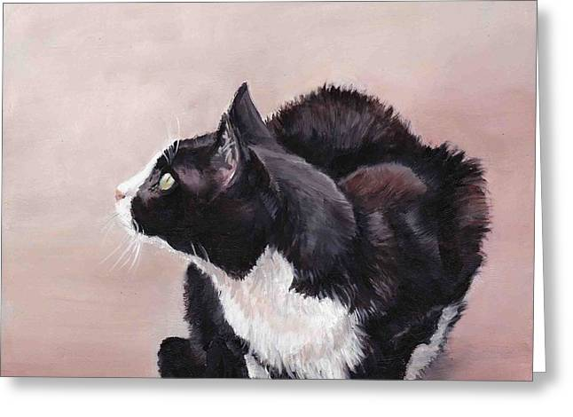 Tuxedo Cat Bird Watcher Greeting Card by Charlotte Yealey