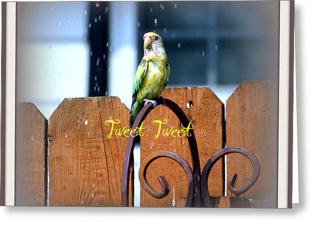 Tweet Tweet Greeting Card by Kay Novy