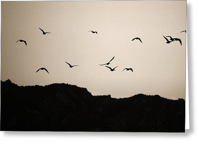Twilight Geese Greeting Card by Marilyn Hunt