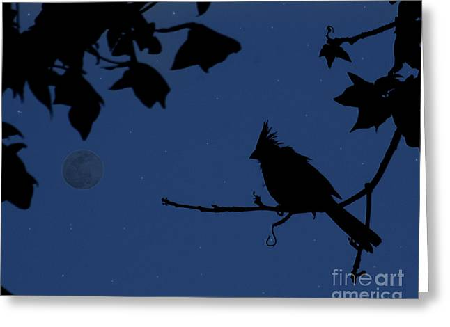 Twilight Sillouette Of Cardinal Greeting Card by Amanda Collins