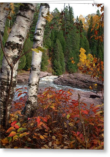 Twin Aspens Greeting Card by James Peterson