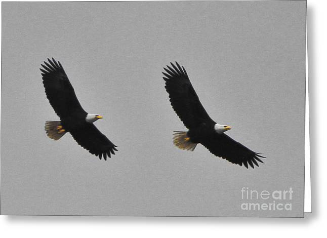 Twin Eagles In Flight Greeting Card