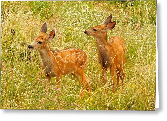 Twin Fawns Greeting Card