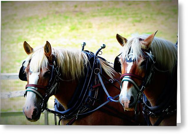 Greeting Card featuring the photograph Twin Horses by Cathy Shiflett