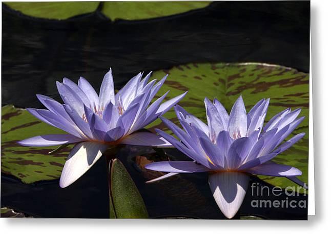 Twin Lavender Tropical Waterlilies Greeting Card by Byron Varvarigos