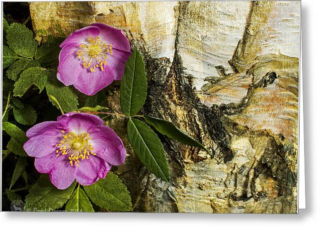 Twin Wild Roses Greeting Card