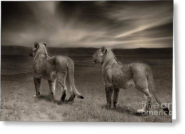 Greeting Card featuring the photograph Twins 2 by Christine Sponchia