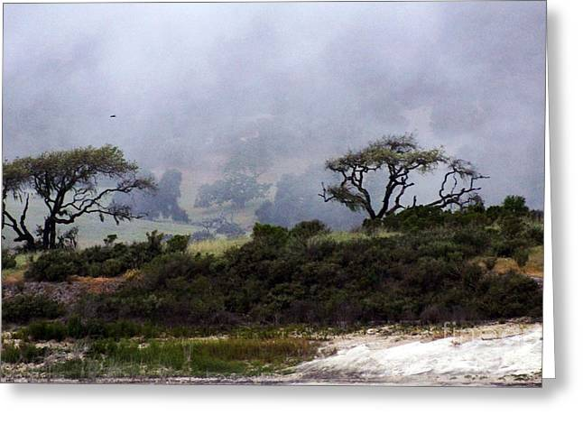 Greeting Card featuring the photograph Twins In  The Fog by Gary Brandes